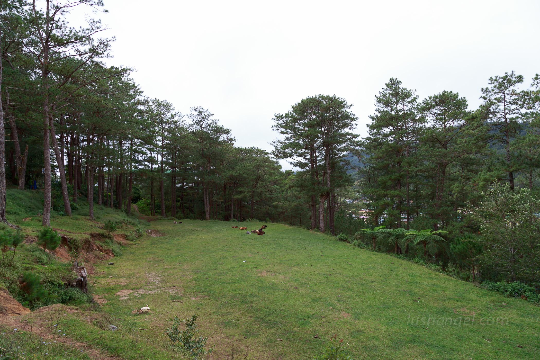 sagada-valley